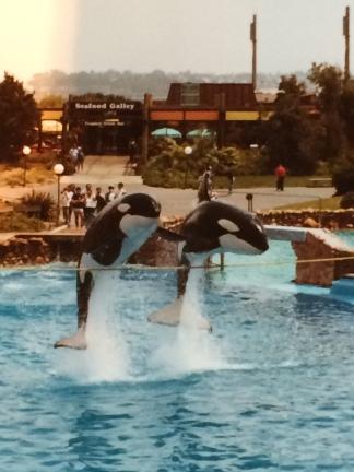 Orcas 2