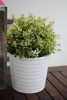 ikea shrub