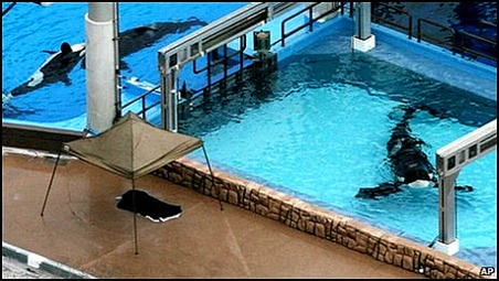 tilikum isolation